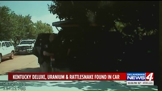 Rattlesnake, uranium, whiskey found during traffic stop